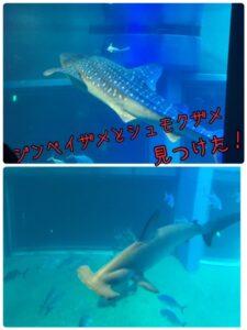 ダブルサメ発見